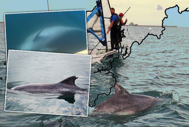Tracking Clet, the solitary bottlenose dolphin