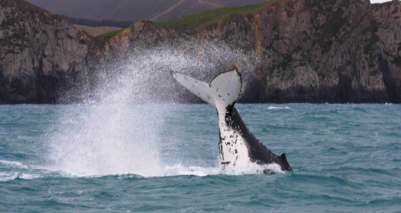 Whale survey cancellation disappointing