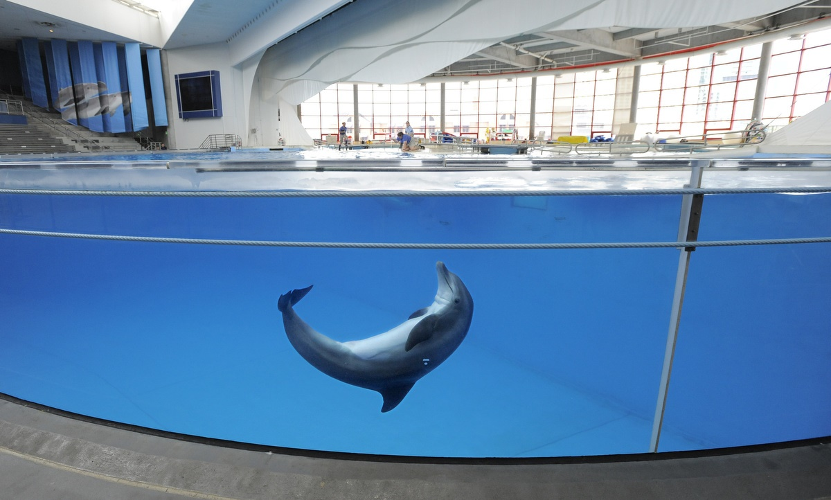 National Aquarium, Baltimore to move their dolphins to a seaside sanctuary