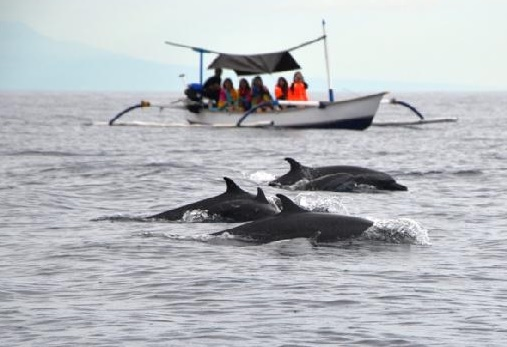 Bali – let wild dolphins remain free