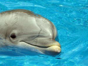 Tampere dolphinarium