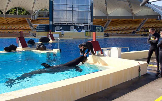 Annulment sought of EC Certificate for Morgan the orca