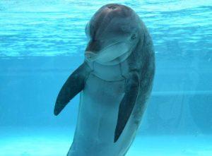 Kolmarden dolphin
