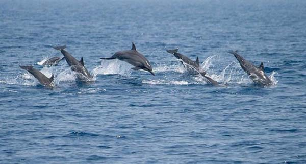 Sri Lanka steps up to stop dolphin hunting
