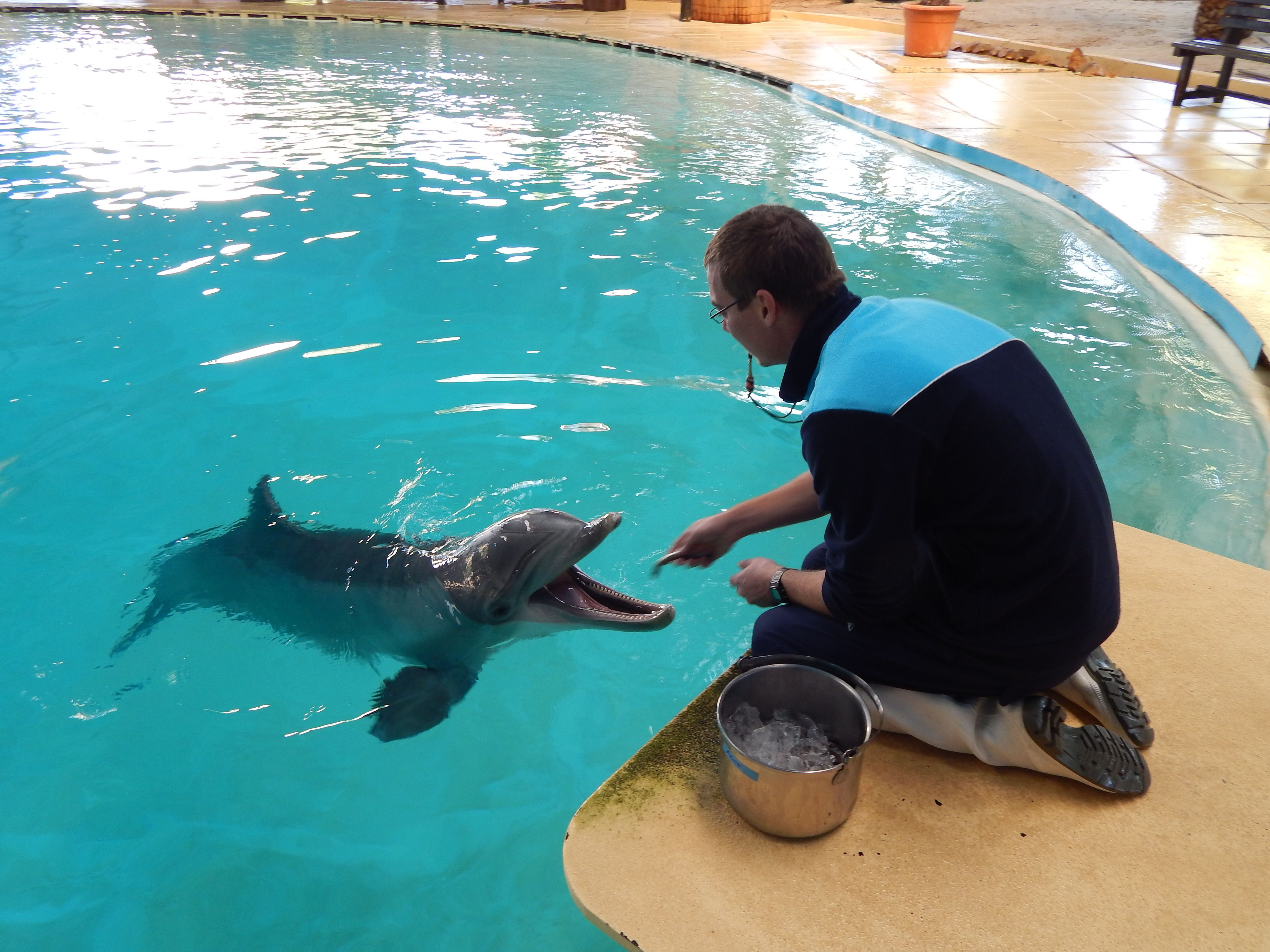 Dolphins transferred to Zoomarine, Portugal