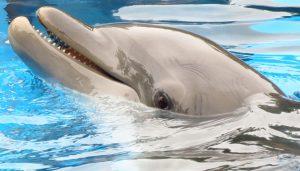 Dolphin_Spain