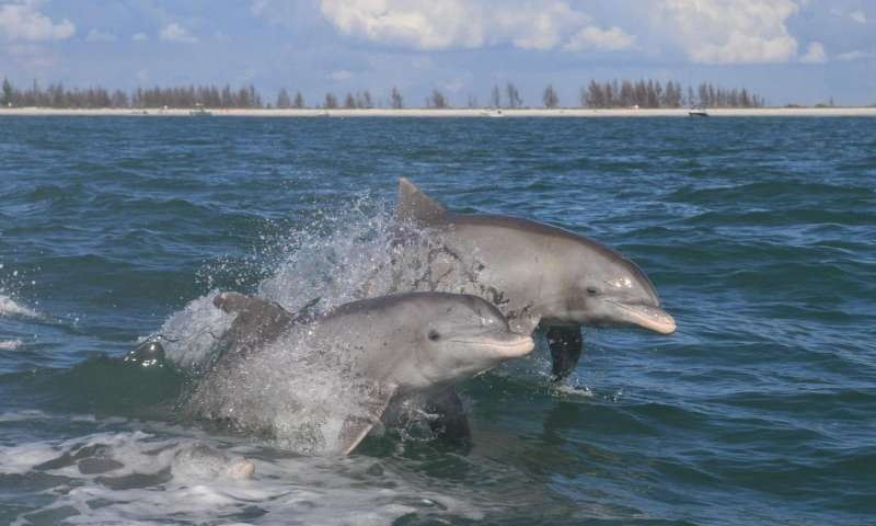 Everglades dolphins have high mercury contamination
