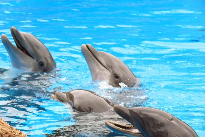 Public consultation on Dolphinaria and Zoos in the EU