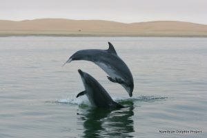 namibian-dolphin-project-2