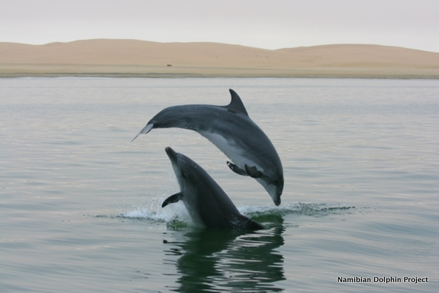 Decision on Namibia's wild dolphin captures will not be made until 2017