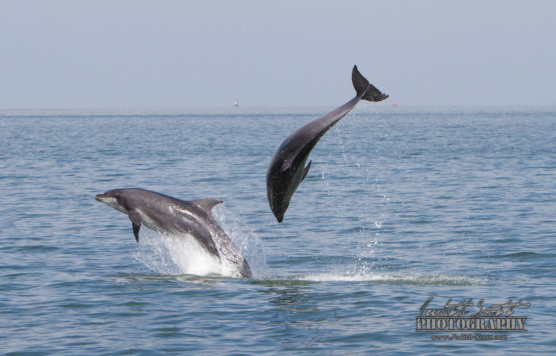 Positive news – no dolphin captures in Namibian waters