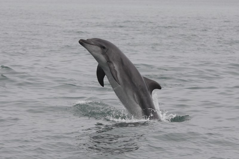 Rumoured dolphin capture vessel in African waters looks set to depart – but to where?