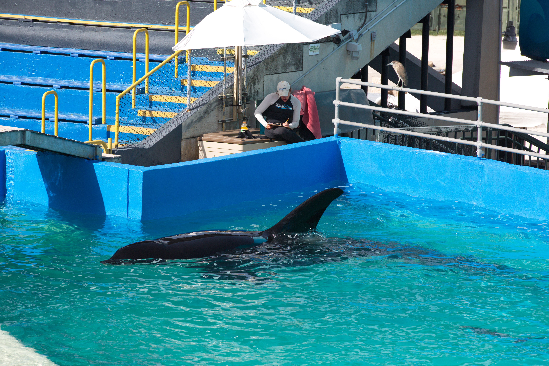 Miami Seaquarium say no release for Lolita