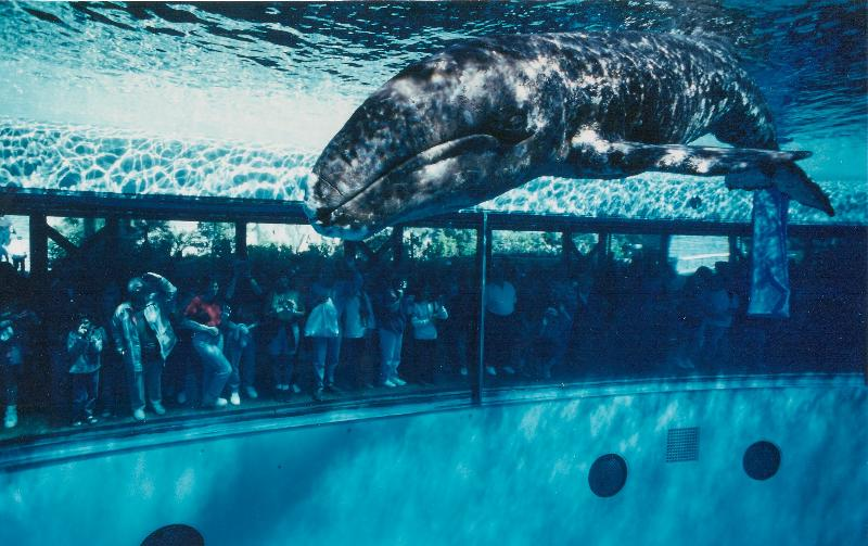 20 years ago this month, JJ the gray whale was rescued
