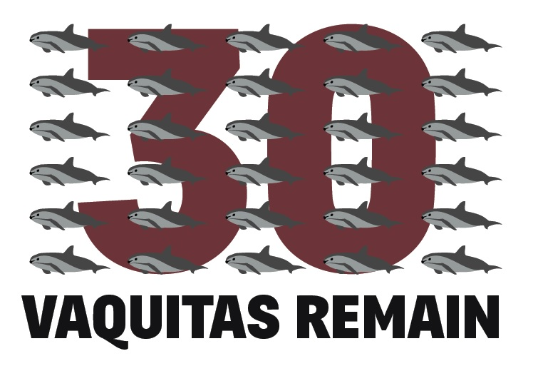 30 vaquitas remain (c) AWI