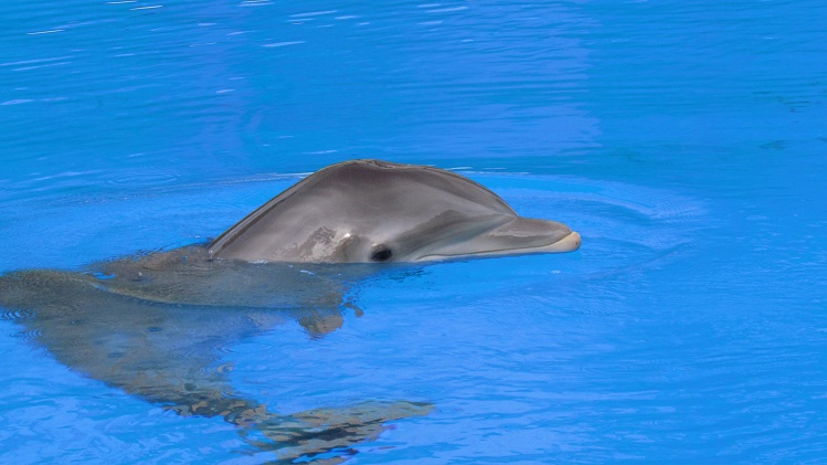 Is St Lucia having second thoughts about dolphin park?