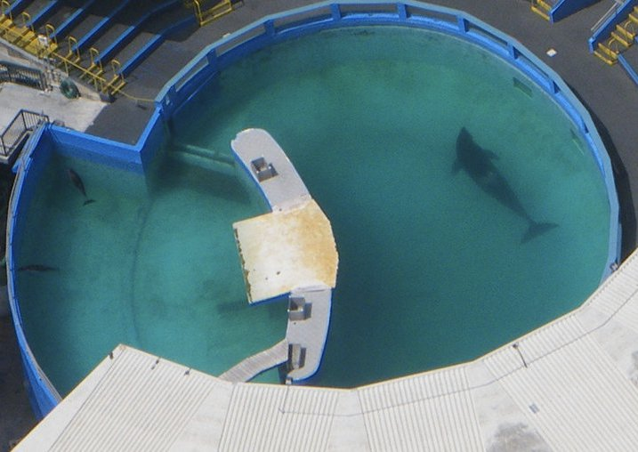 US officials say Lolita's tank size may be illegal