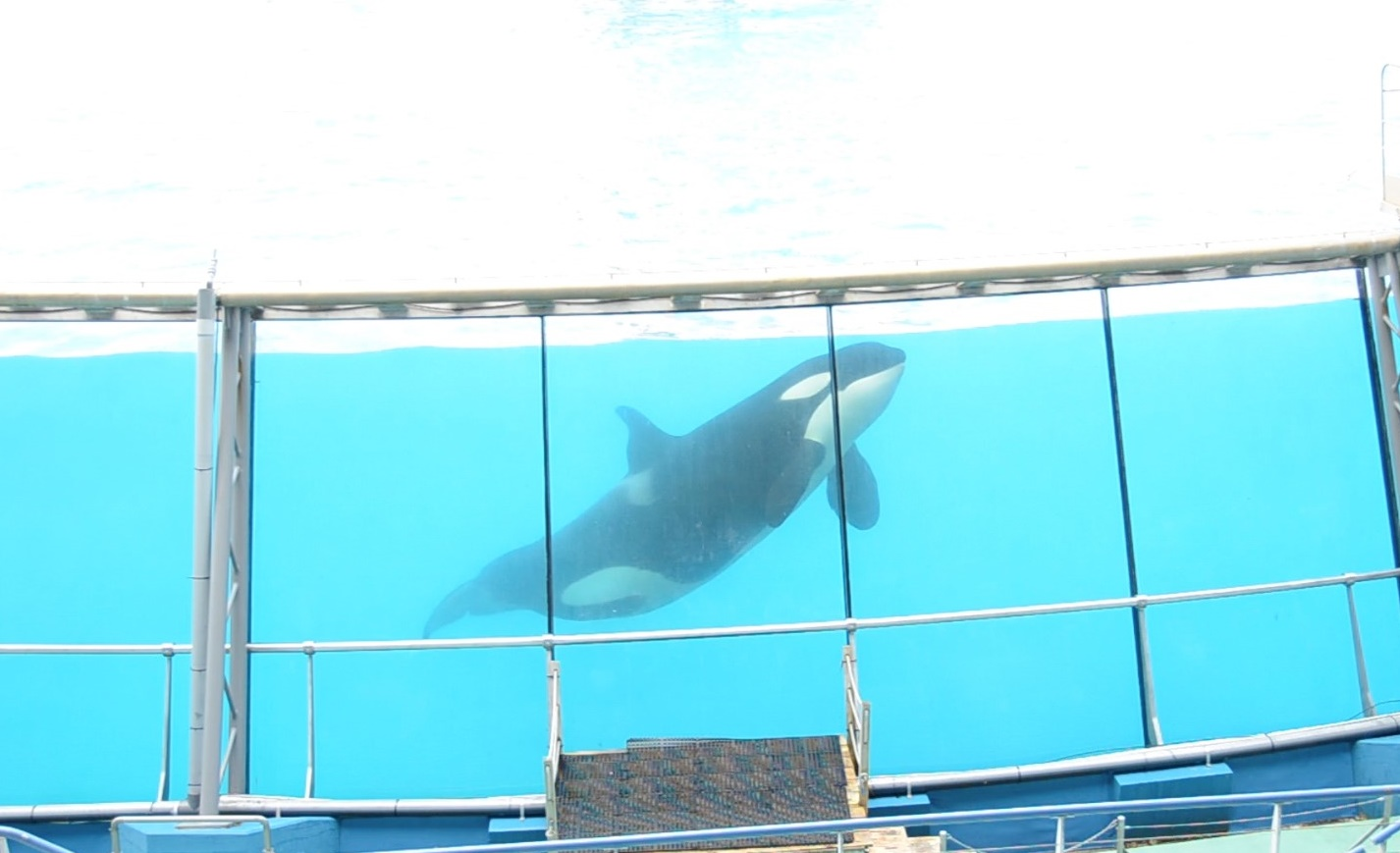 Inside the Tanks – discussing cetacean captivity