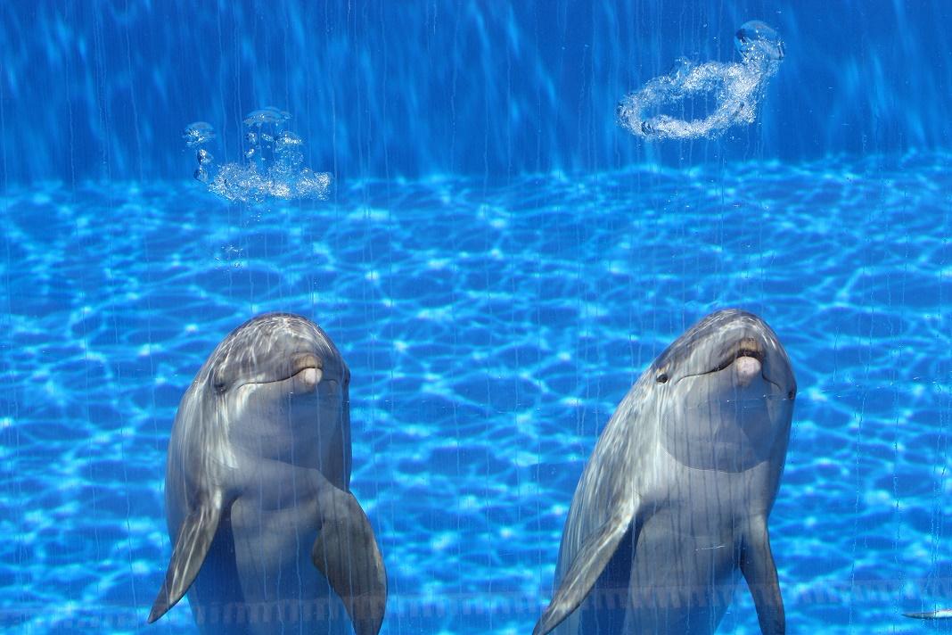 MexicoCity_ban_captive_marine_mammals