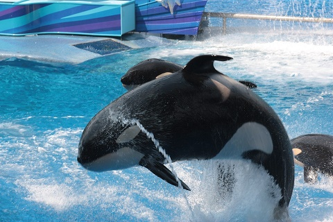 SeaWorld refuse document disclosure