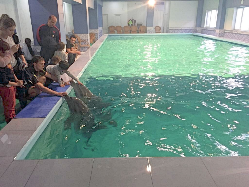 No \'paradise\' for Best Western swimming pool dolphins ...