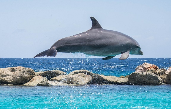 St Lucia – proposed dolphin park update
