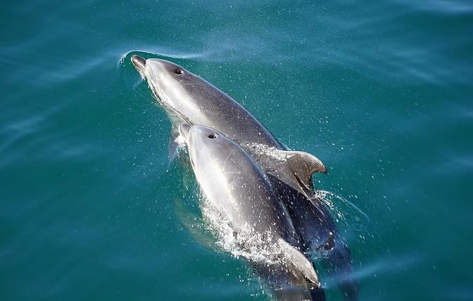 Plastics found in almost 10% of cetaceans in Irish waters