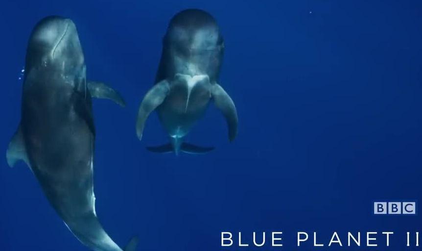 Blue Planet II BBC