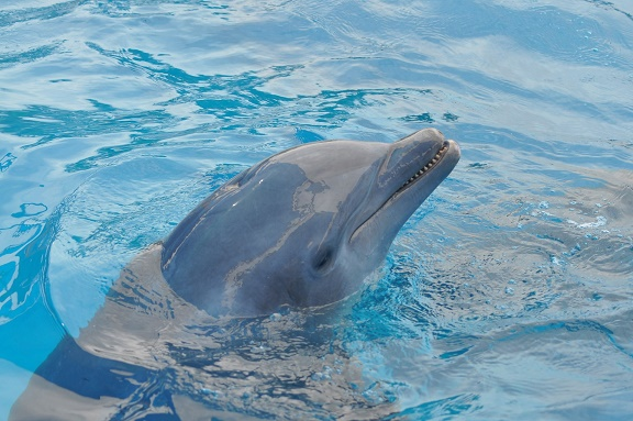 Update on Moroccan dolphinarium plans