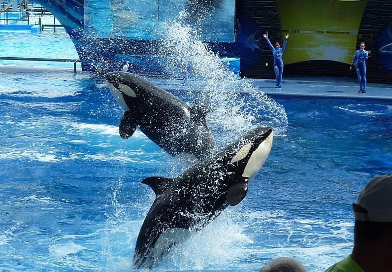 SeaWorld copyright Xanio