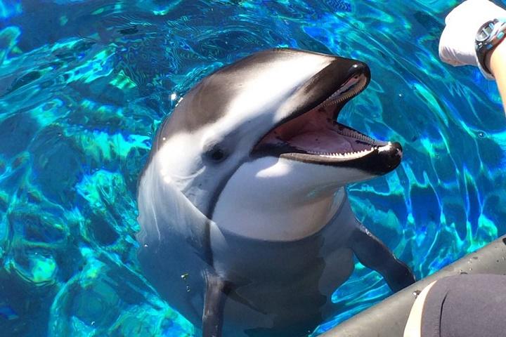 Vancouver Aquarium (c) Global News