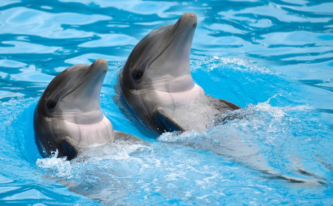 Ecuador says no to new dolphin facility