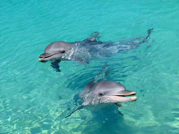 Latest update on Honey the lone dolphin at Inubosaki   Marine Connection